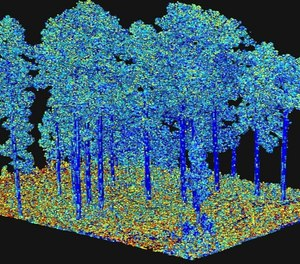 """Output from processing of terrestrial laser scanning data, representing an important fuel characteristic """"surface area"""" as illustrated by the different colors. This is input to next-generation fire behavior models. (Photo/ Eric Rowell, Tall Timbers Research Station)"""